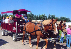 Horse drawn wagon rides at MacQueen Apple Orchard, Cider Mill, Farm Market, and Pick Your Own Apples, Holland, Ohio, west of Toledo